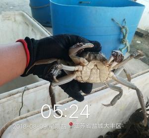 螃蟹发货案例